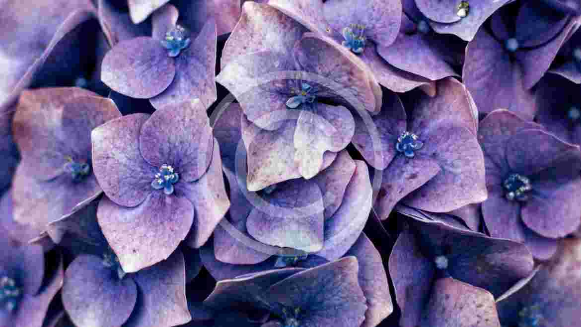 Exciting Lilac